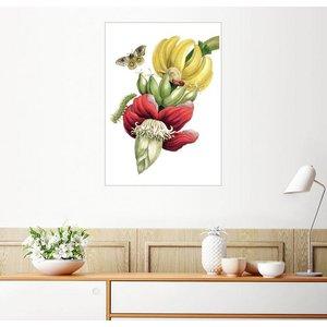 Posterlounge Wandbild Maria Sibylla Merian Blühende Banane und Automeris