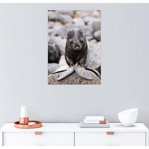 Posterlounge Wandbild Alaska Stock Kleiner Seebär