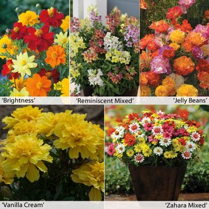 Annual Flower Border Seed Collection (Short)