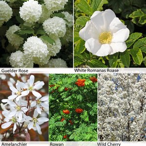 Floral Hedging Collection