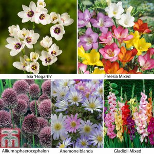 Summer Flowering Bulb Collection