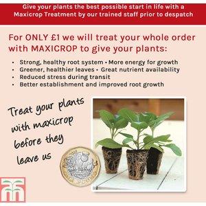 Maxicrop Plant Treatment
