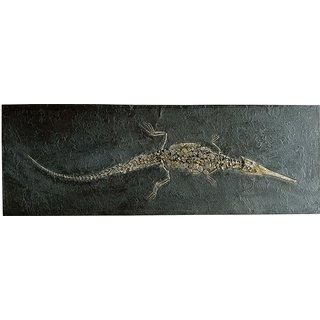 Fossiles Löffelschnauzenkrokodil (Stenosaurus)