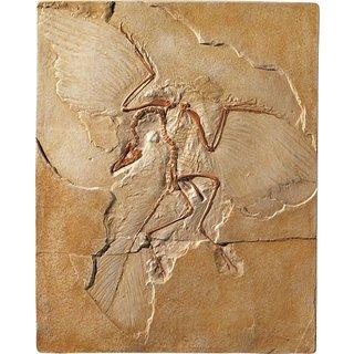Fossiler Urvogel Archaeopteryx