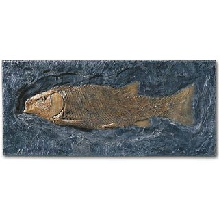 Schmelzschuppenfisch (Lepidotus elvensis)