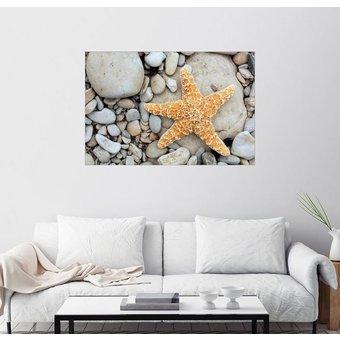 Posterlounge Wandbild Tony Craddock Seestern auf Steinen