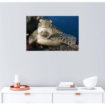 Posterlounge Wandbild Steve Jones Ruhende Meeresschildkröte