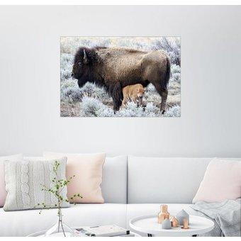 Posterlounge Wandbild Bison Kuh mit Kalb, Yellowstone Nationalpark