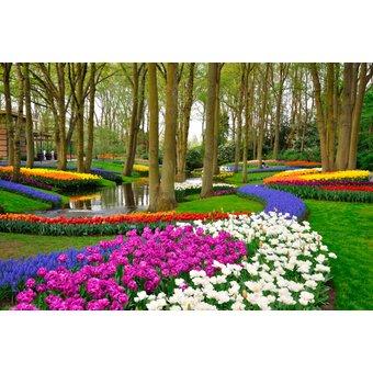 PAPERMOON Fototapete Tulips in Keukenhof Park, Vlies, in verschiedenen Grössen