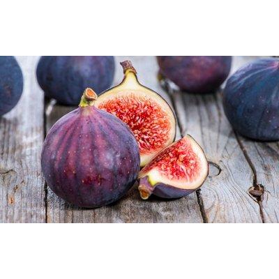Fig Tree - Patio Standard Fig Tree - Ficus carica