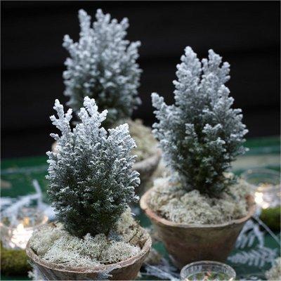 Mini Snow Covered Christmas Fir