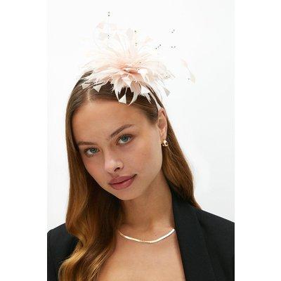 Coast Premium Curl Feather Fascinator -, Pink