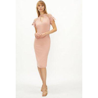 Coast Lace Cap Sleeve Shift Dress -, Pink