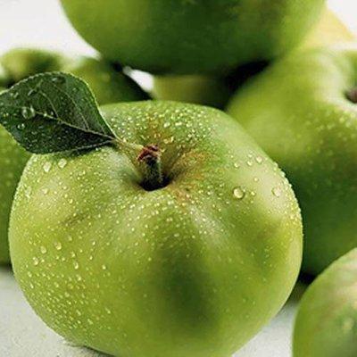 Bramley Apple Tree in 5L pot