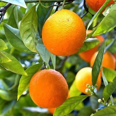 Mandarin Citrus 6L