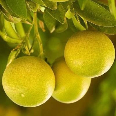 Grapefruit Citrus 6L