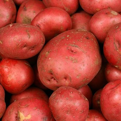 Premium Seed Potato Albert Bartlett Rooster 2kg