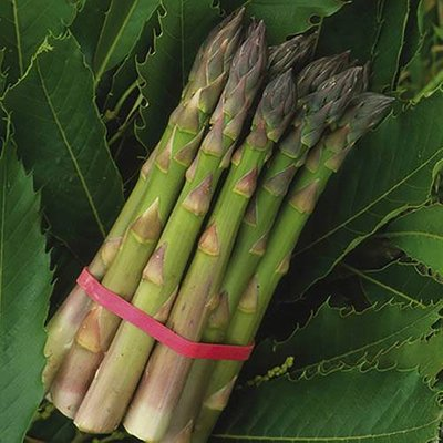 Asparagus Pacific 2000 crowns