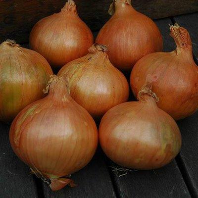 Onion Sets Stuttgart Giant