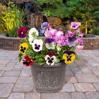 "Pair Pansy Matrix 9"" metallic planters"