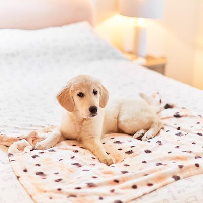 Personalised Photo Dog Blanket
