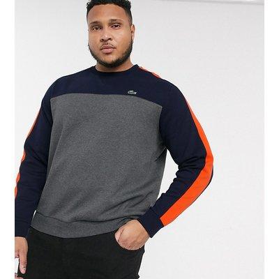 Lacoste PLUS – Sweatshirt mit Rundhalsausschnitt-Grau