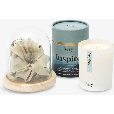 Father's Day air plant and scented candle gift set
