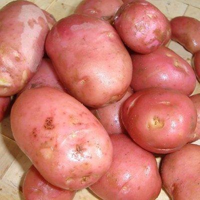 potato Desiree