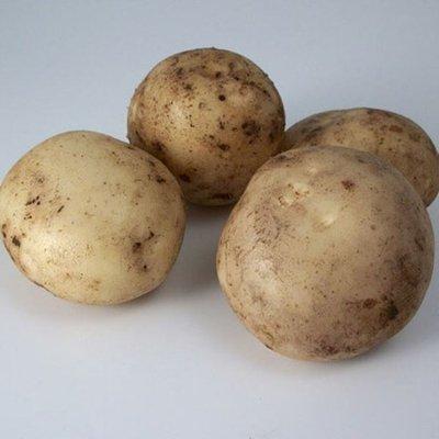 potato Pentland Javelin
