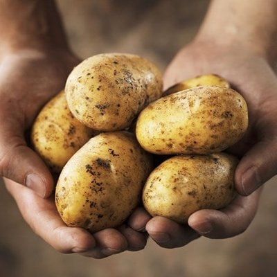 potato Cara