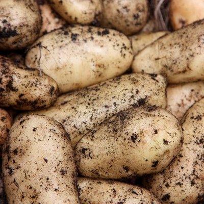 potato Sharpe