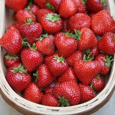 strawberry Albion (PBR)