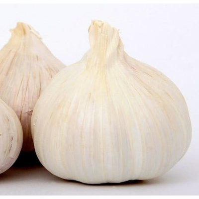 garlic Cristo