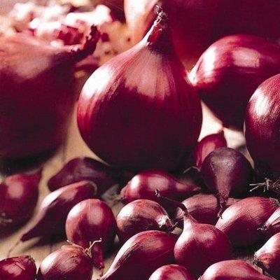 onion Electric (PBR)