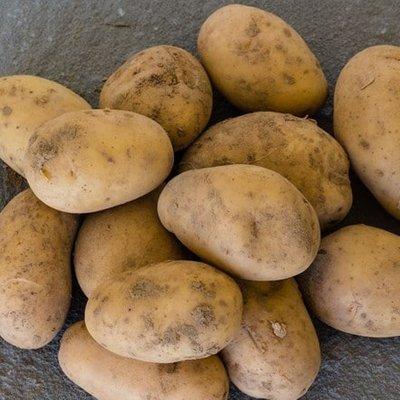 potato Swift (PBR)