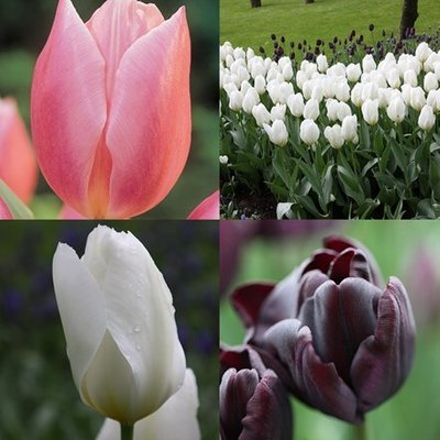 Tulips for the vase collection