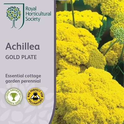 Achillea filipendulina Gold Plate