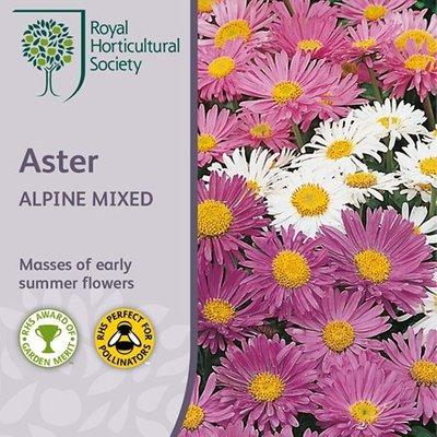 Aster alpinus