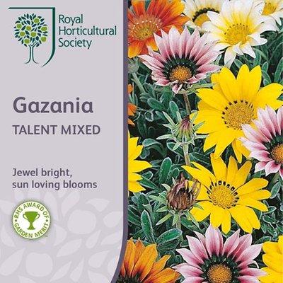 Gazania Talent Series