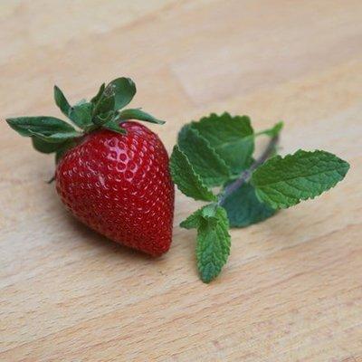 Mentha piperita Strawberry