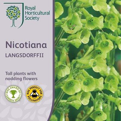Nicotiana langsdorffii
