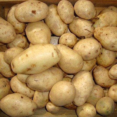 potato Majestic
