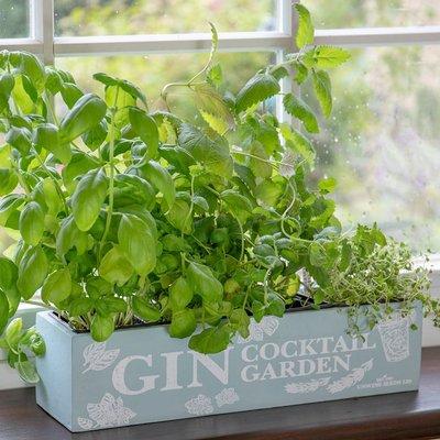 Gin cocktail herb garden kit gift set