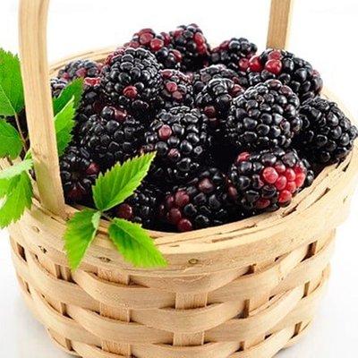 blackberry Apache