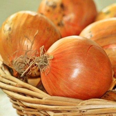 onion Hercules
