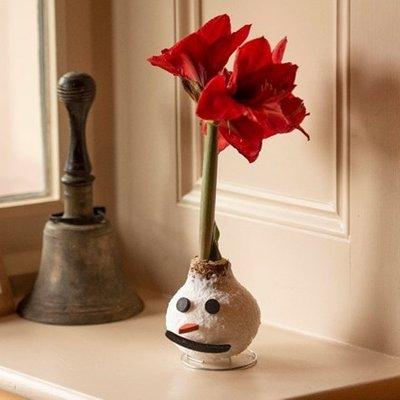 Wax Amaryllis Frosty