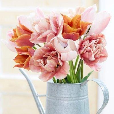 Brown sugar tulip collection