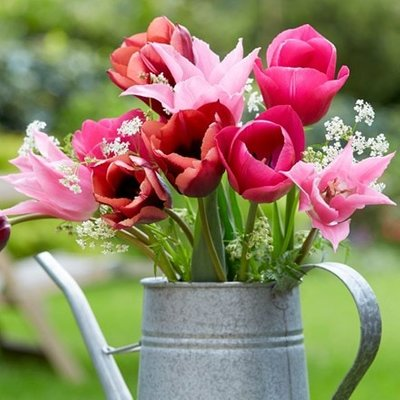 Caramel blush tulip collection
