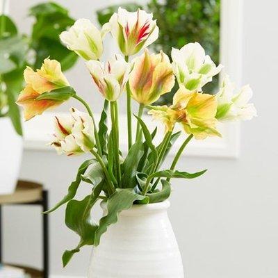 Artist tulip collection