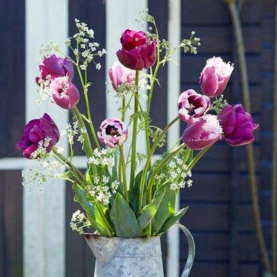 Regal tulip collection